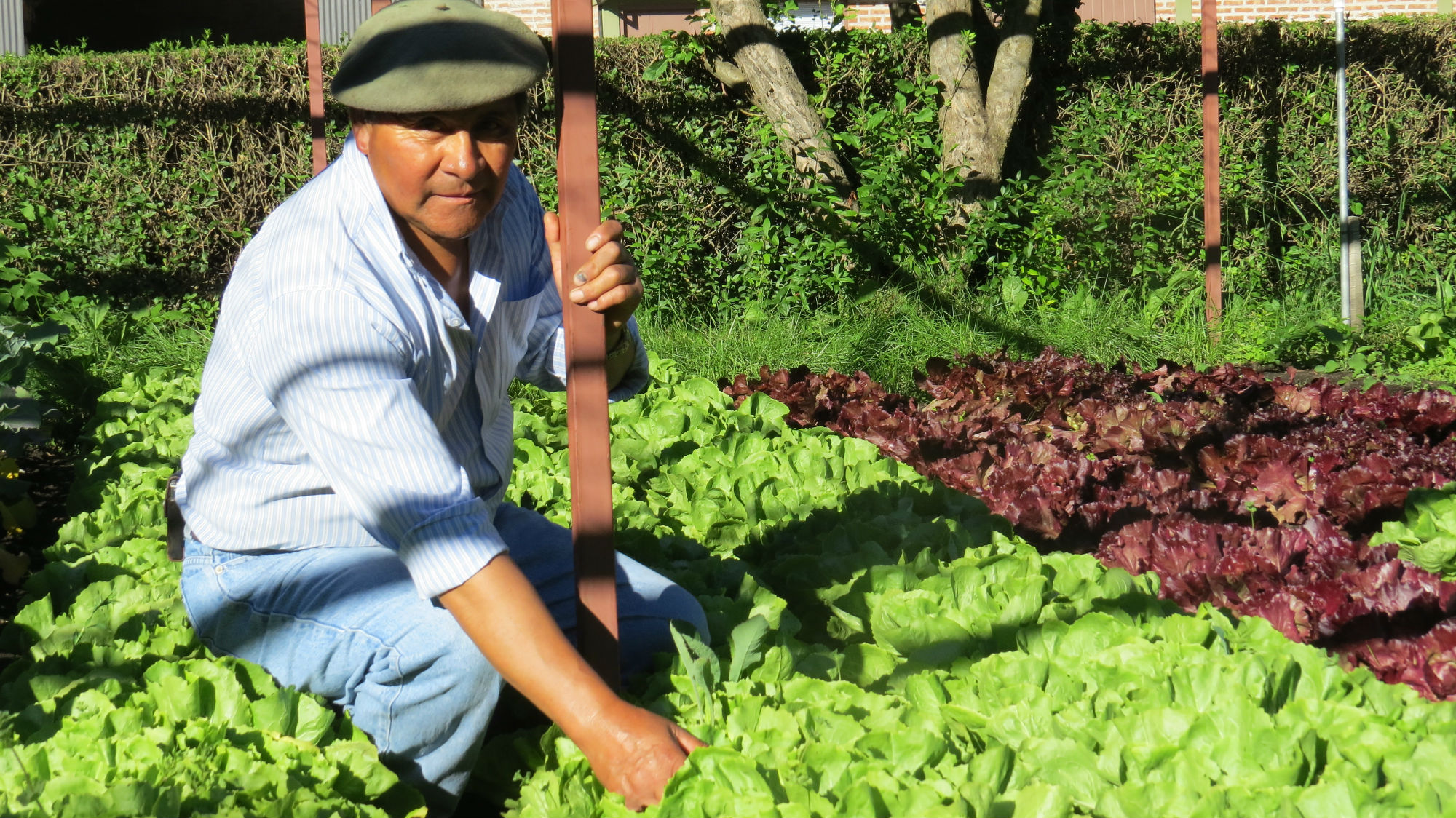 Ronnie Olsen´s greatest cooperator, Mr. Segundo Collinao, soul and keeper of the vegetable garden at San Huberto since ever